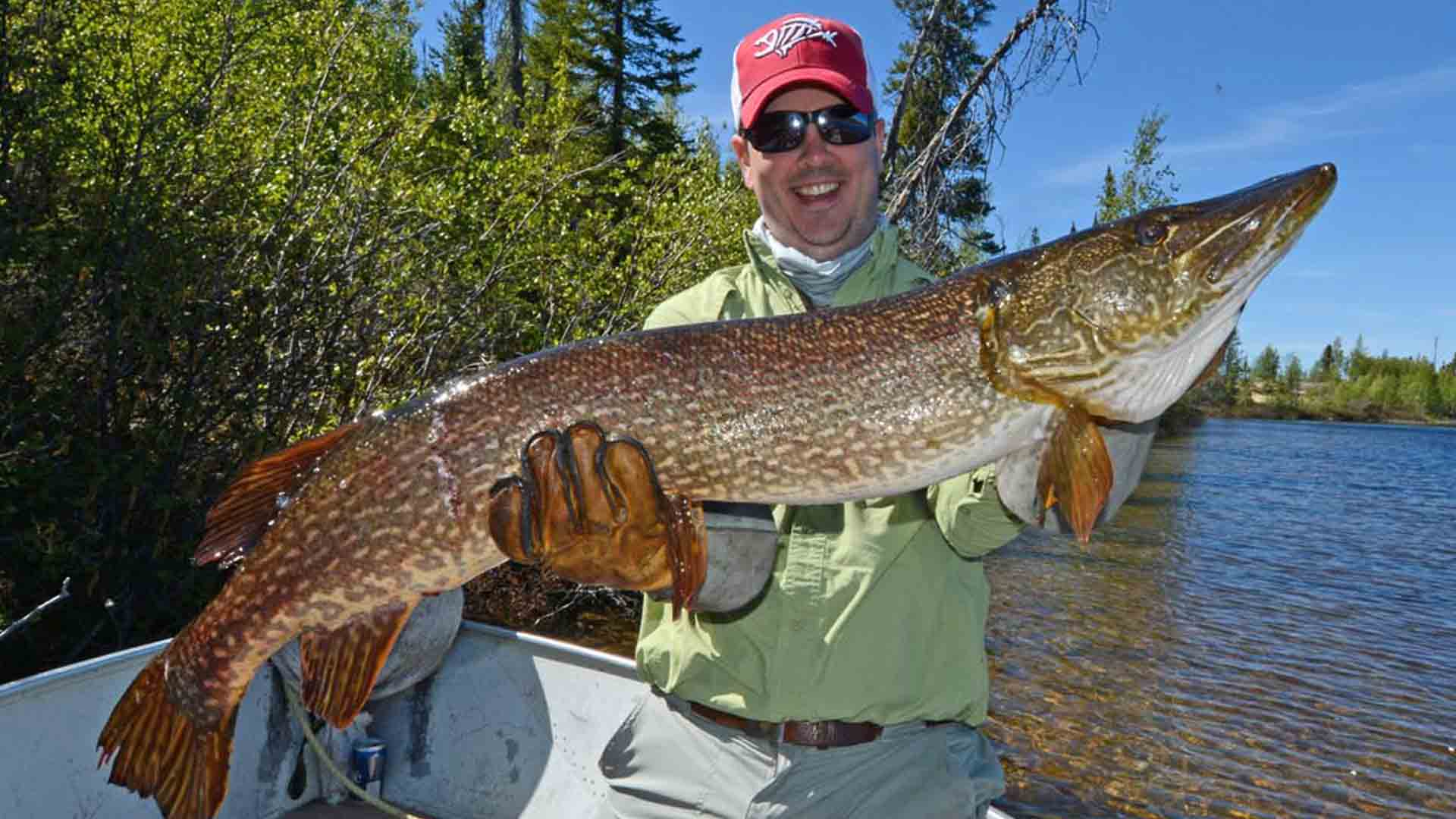 Gangler's northern pike