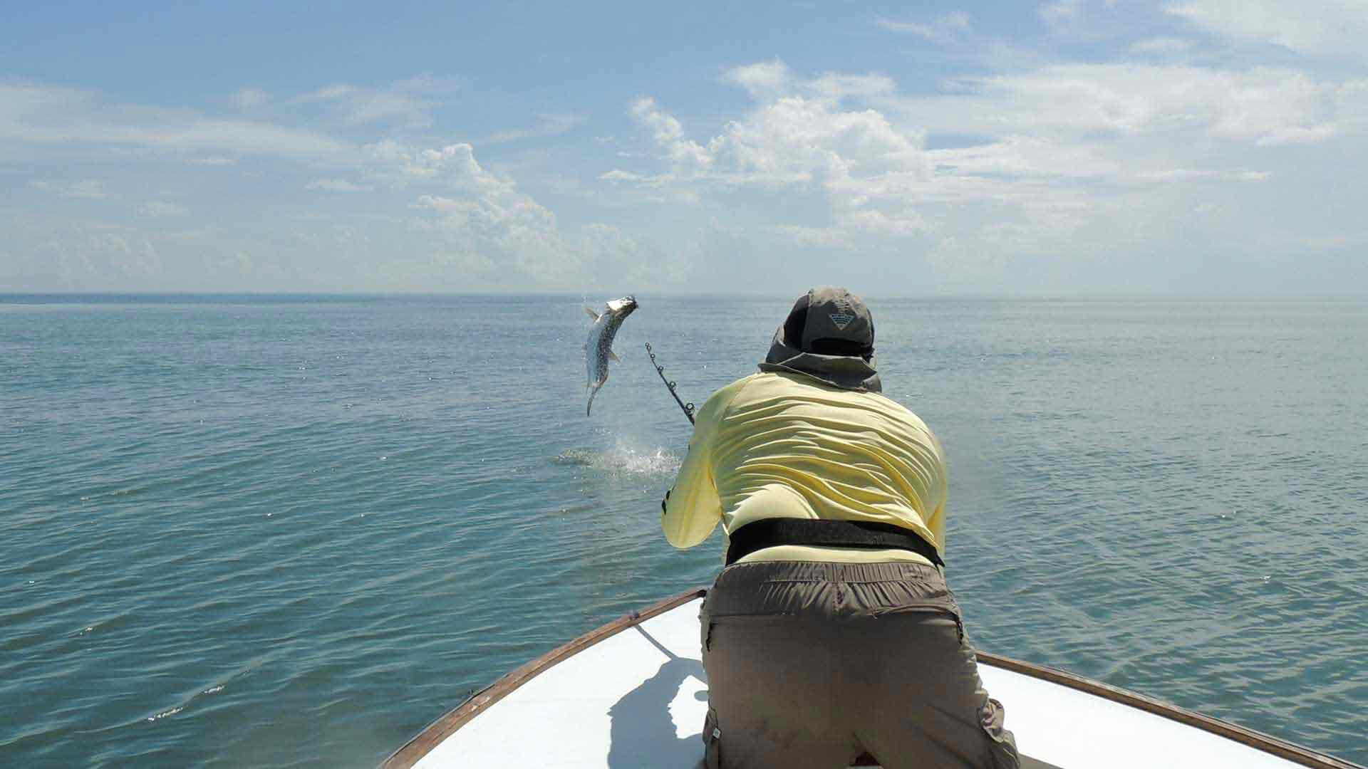 Angler Bowing to a Tarpon on the Line