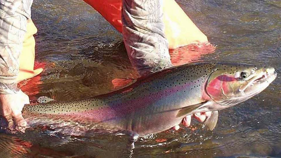 Washington Steelhead Fishing