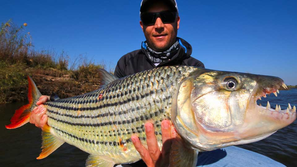 trophy tiger fish africa