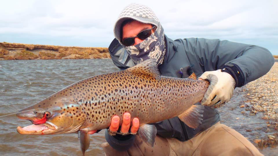 Sea-run brown fishing